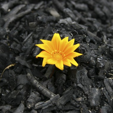 3-Beauty-out-of-ashes